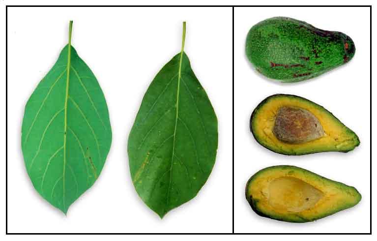 Botany by daniel garcia study