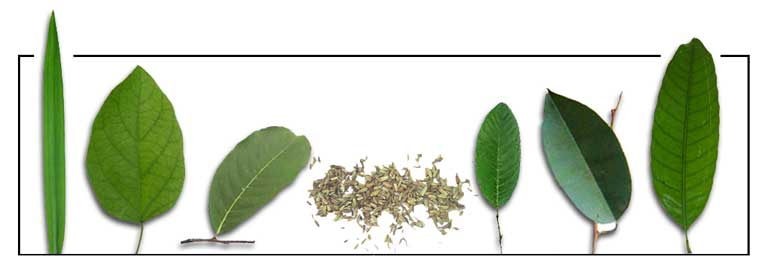 the efficacy of takip kohol centalla asiatica Filipino: yahong-yahong / takip-kohol centella asiatica medicinally, gotu kola is not only used as a mild nervine.